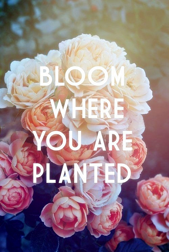 bloom_planted